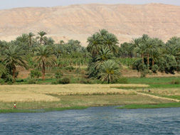 Nile. Photograph from the boat